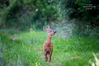 Bild: Wildtierschutz Deutschland e.V. Fotograf: Timo Litters, Wildtierschutz Deu