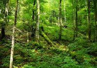 Dickicht des Waldes enthält Ressourcen für Biosprit.