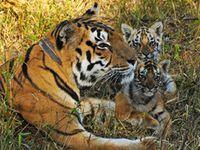 Bild: Joseph Vattakavan / WWF