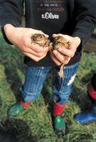 Achtung Autofahrer - Kröten und Frösche sind unterwegs in die Flitterwochen
