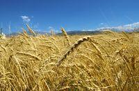 Mit seinen 200 Millionen Hektar landwirtschaftlicher Fläche ist Kasachstan der ideale Partner zur Sicherung der Lebensmittelversorgung / Bild: Botschaft der Republik Kasachstan in der Bundesrepublik Deutschland
