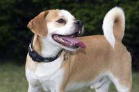 """An Epilepsie erkrankte Hunde verhalten sich zwischen den Anfällen völlig normal. Die Anfälle erfolgen zudem meist in Ruhephasen bzw. im häuslichen Bereich. Ausgiebige Spaziergänge schaden also nicht. Bild: """"obs/Bundesverband für Tiergesundheit e.V./© Andrea Klostermann"""""""