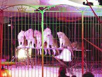 Freiwillig stellen sich Löwen nicht in einer Reihe auf. Bild: (c) VIER PFOTEN