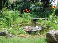 Ein typischer Gartenteich