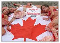 PETA-Aktion gegen das Robbenschlachten. 400.000 Robben wurden 2012 von der kanadischen Regierung zur Tötung freigegeben. Bild: PETA
