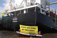 """Am Mitwochmittag haben sich Greenpeace-Kletterer an die Schiffstaue des Frachters """"Eilbeck"""" gehängt. Damit protestieren sie gegen den Weitertransport von Finnwalfleisch nach Japan. Bild: Greenpeace"""