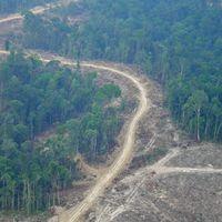 Zerstörung der Regenwälder auf Sumatra. Bild: WWF