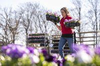 31/03/2021 - Erfurt: Gärtnerinnen und Gärtner bepflanzen am 31. März 2021 das große Blumenbeet auf dem egapark-Gelände. Bild: Jacob Schröter Fotograf: Jacob Schröter