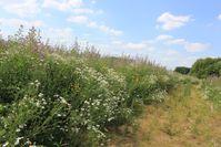 """Bild: Screenshot Internetseite: """"https://lebensraum-brache.de/bunte-biomasse-ressource-fuer-artenschutz-und-landwirtschaft/"""" / Eigenes Werk"""