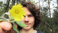 """Bild: Screenshot Video: """"Essbare Psychoaktive Wildpflanzen: Kleines Habichtskraut - Ein Cannabisersatz"""" (https://youtu.be/yMqK00rC3rw) / Eigenes Werk"""
