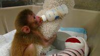 Von der Mutter getrenntes Affenkind an einem der Nationalen Gesundheitsinstitute in den USA. Bild: PETA Deutschland e.V.