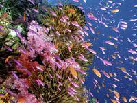 Bild: Cat Holloway / WWF-Canon