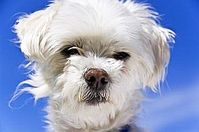 Hundeschnauze: Erkennt fast alle chemischen Verbindungen. Bild: aboutpixel.de/Bounce