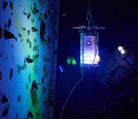 Der Insektenkundler Daniel Bolt beobachtet im peruanischen Regenwald, welche Falterarten von der in Jena entwickelten LED-Lampe angelockt werden. Quelle: Foto: Gunnar Brehm/FSU (idw)