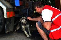 VIER PFOTEN Mitarbeiter lockt einen Streunerhund an. Bild:  (c) VIER PFOTEN, Livia Cimpoeru