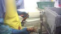 Ohne Betäubung werden den empfindlichen Hummern bei Linda Bean's Maine Lobster die Scheren abgerissen. Bild: © PETA