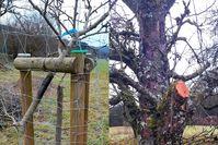 Bäume bei Mittenaar-Offenbach beschädigt - Wer kann Angaben zu den Tätern machen? Bild: Polizei