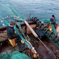 Sechs Millionen Tonnen Fisch zusätzlich zur von Wissenschaftlern empfohlenen Menge wurden in diesen neun Jahren allein im Nordostatlantik gefischt. Bild: Quentin Bates / WWF-Canon