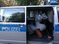 """""""Blauer"""" Esel in Gewahrsam genommen"""