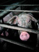Bild: Vier Pfoten - Stiftung für Tierschutz / pixelio.de
