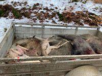 Diese Tiere können nicht mehr als Lebensmittel verwertet werden. Bild:     Wildtierschutz Deutschland e.V.