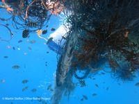 Fisch in einem Geisternetz (Malediven, 2014)