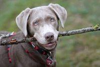 Hund: Menschen erwarten oftmals zu viel.