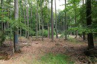Dannenröder Wald (2020)