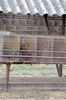 Selbst in Deutschland betreiben Nerzzüchter ihre Farmen mit rechtswidrigen Käfigen. Bild: PETA