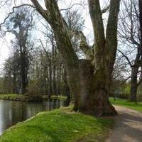 Fünf Minuten Bewegung im Park ausreichend Bild: pixelio.de/Jerzy Sawluk