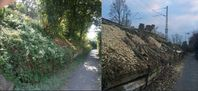 Die Deutsche Bahn will noch mehr Bäume und Büsche roden, als diese ohnehin jedes Jahr zerstört (Symbolbild)