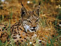 © WWF-Spain/Jesus Cobo
