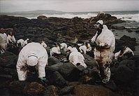 Reinigung der Küste in Galicien durch Freiwillige nach Ölpest