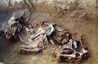 Pferdegrab von der Alias Ebé Ausgrabungsstätte, Churapchinsky Distrikt, Jakutien (Russland). Mission Archéologique Française en Sibérie Orientale (MAFSO) Quelle: Eric Crubézy. (idw)