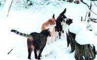 Bei Frost und Schnee finden Streunerkatzen keine Nahrung. Bild:  VIER PFOTEN