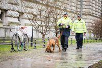 Hundeführer mit Mantrailer Bloodhound.