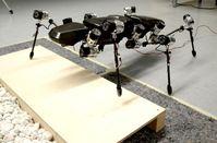 Elastische Gelenke und sechs Beine, die ähnlich wie bei einer Stabheuschrecke funktionieren: Das macht den Laufroboter Hector weltweit einmalig. Quelle: Foto: Universität Bielefeld (idw)