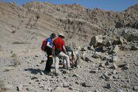 Die in den Bremer Laboren untersuchten Proben stammen aus Gesteinslagen in den Vereinigten Arabischen Emiraten, die vor 250 Millionen Jahren am Meeresboden abgelagert wurden. Quelle: Foto: D. Astratti (idw)