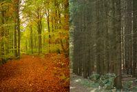 Naturwald Akademie und NABU: Natur ist wichtiger als Holz - Deutsche wollen mehr staatlichen Schutz für den Wald