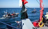 Grünes Kunststoff-Geisternetz wird an Bord gehoben  Bild: GRD Gesellschaft zur Rettung der Delphine e.V. Fotograf: Chris Till