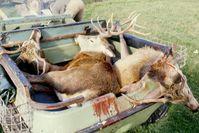 Das Ergebnis wenn Jäger auf der Jagd waren: Viele Tote (Symbolbild)