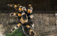 Bild: sikapaulus / pixelio.de