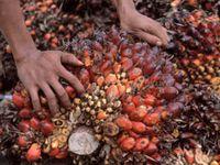 Bild: Alain Compost / WWF-Canon