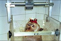 Affe mit Elektroden und Kopfhalter in einem Primatenstuhl. Bild: Ärzte gegen Tierversuche -  AESOP Project