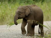 Bild: © WWF / Cede Prudente