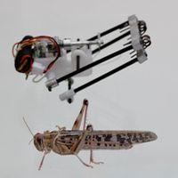 Roboter und Vorbild: Lange Beine bieten Sprungkraft. Bild: aftau.org
