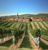 Weinberge nördlich von Pressburg Bild: Bedrich Schreiber / Slovak Spectator / UM / Eigenes Werk