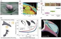 Schweinswal und Design des künstlichen Biosonars.