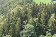 Die Wissenschaftler wollen untersuchen, welche Maßnahmen der Waldbewirtschaftung sich eignen, um Wälder an Umweltveränderungen anzupassen.