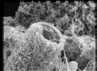 Gewachsene Knochenersatz-Röhrchen unter dem Mikroskop.